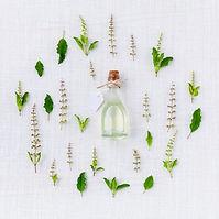 Medicinal herb garden grow.jpg