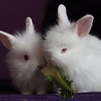 Rabbits keeping.jpg