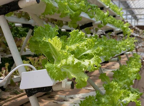 hydroponics.webp