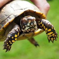 pet turtle.jpg