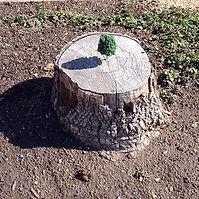 Reforestation hobby.jpg