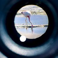 Wildlife observation.jpg