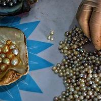 pearl farming.jpg