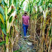 Corn maze exploring.jpg