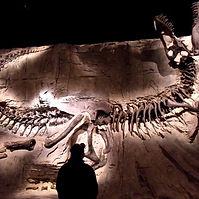 Dinosaur fossils finding.jpg