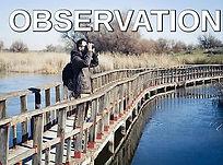 observation.jpg