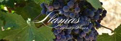 Llamas Family Wine