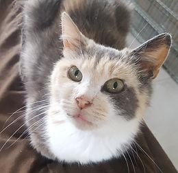 Jun (adoption de <3)