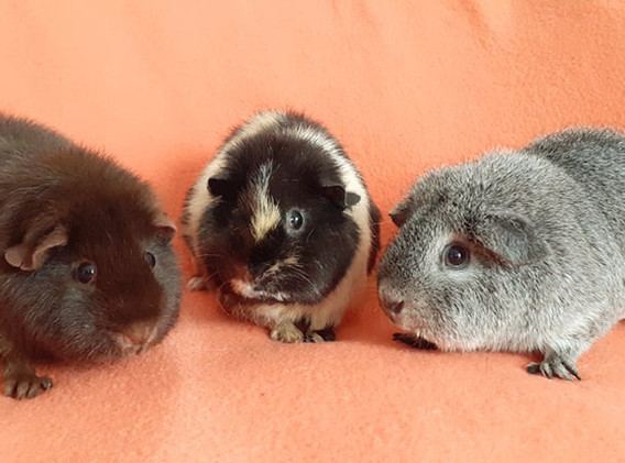 trio-hamster15.jpg