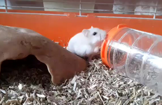 video-hamster.mp4