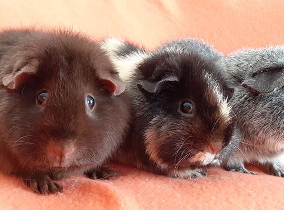 trio-hamster10.jpg
