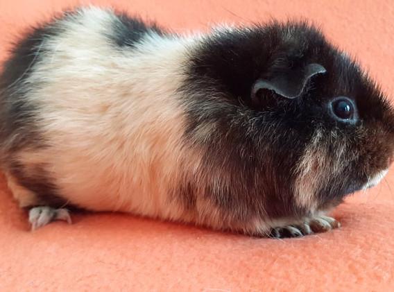 trio-hamster-6.jpg