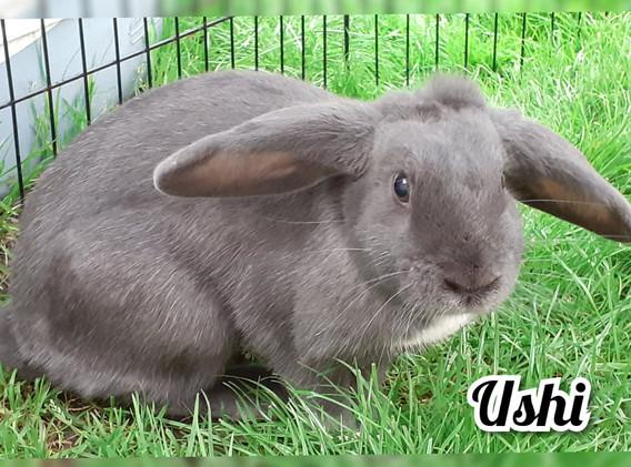 ushi-1.jpg