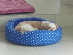 Leo roncando solto!
