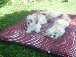 Tudy e Belinha