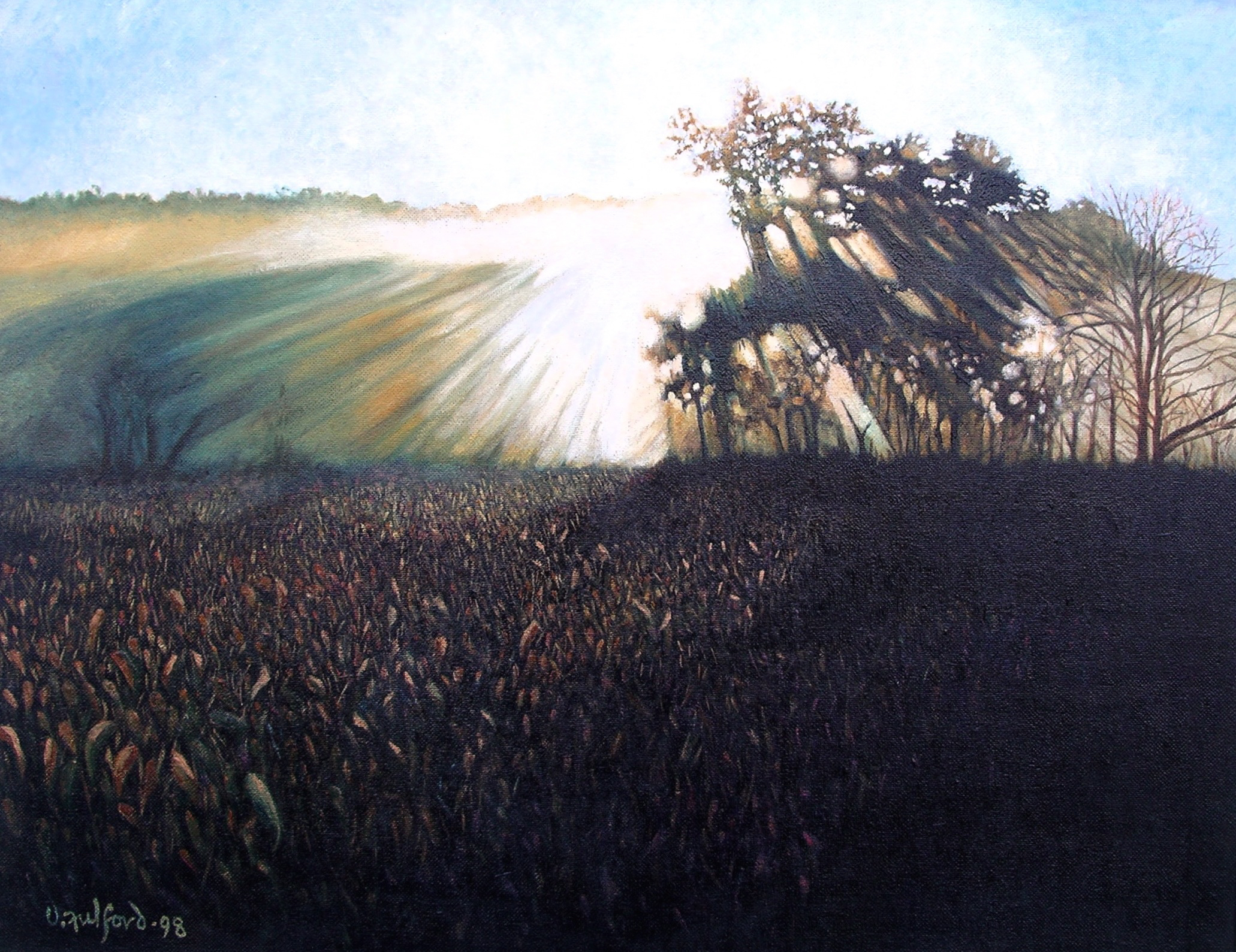 Sunrise in cornfield.jpg