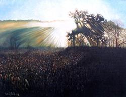 Sunrise in cornfield.jpg