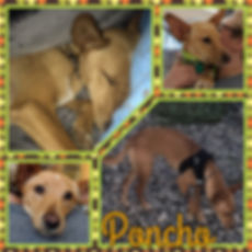 Poncho collage.JPG
