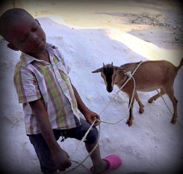 One of the 41 goats donated by Strength of Heart Ministries