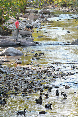 Brothers & Fisherman on Creek