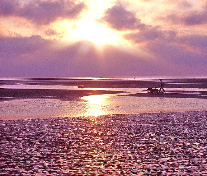 Sunrise Beach Walk w/ Dog