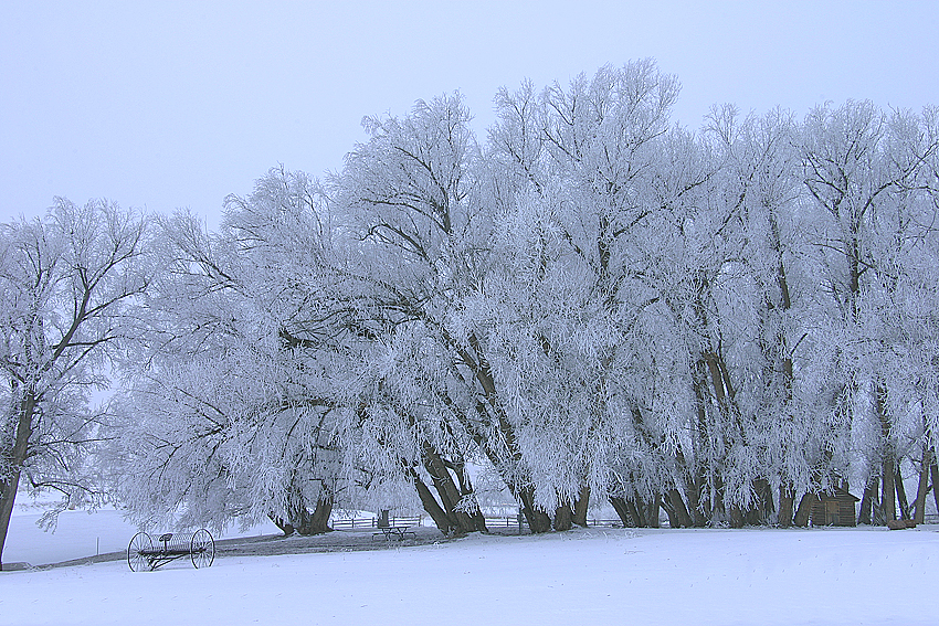 Colorado Ice Trees, Landscape