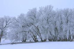 Colorado Ice Trees, Landscape