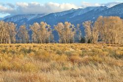 Colorado Trees & Snowy Mtns