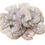 Thumbnail: Shrimp - Medium Tail Off