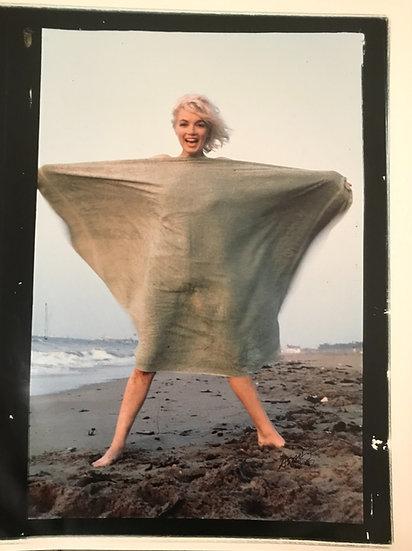 Marilyn Monroe Butterfly