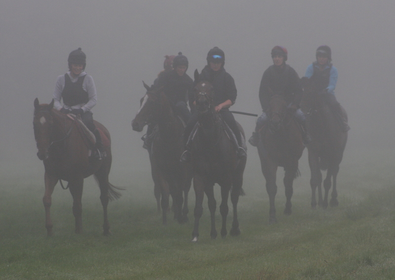 Misty Morning on Gallops