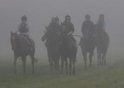 Misty Morning on Gallops