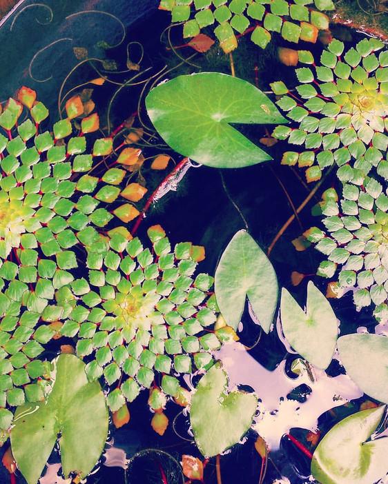 Foliage Fractals