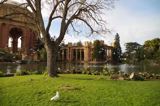 Taking Flight at the Palace