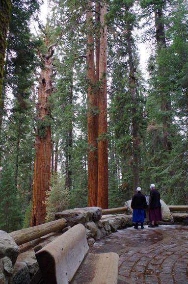 Women at Sequoia