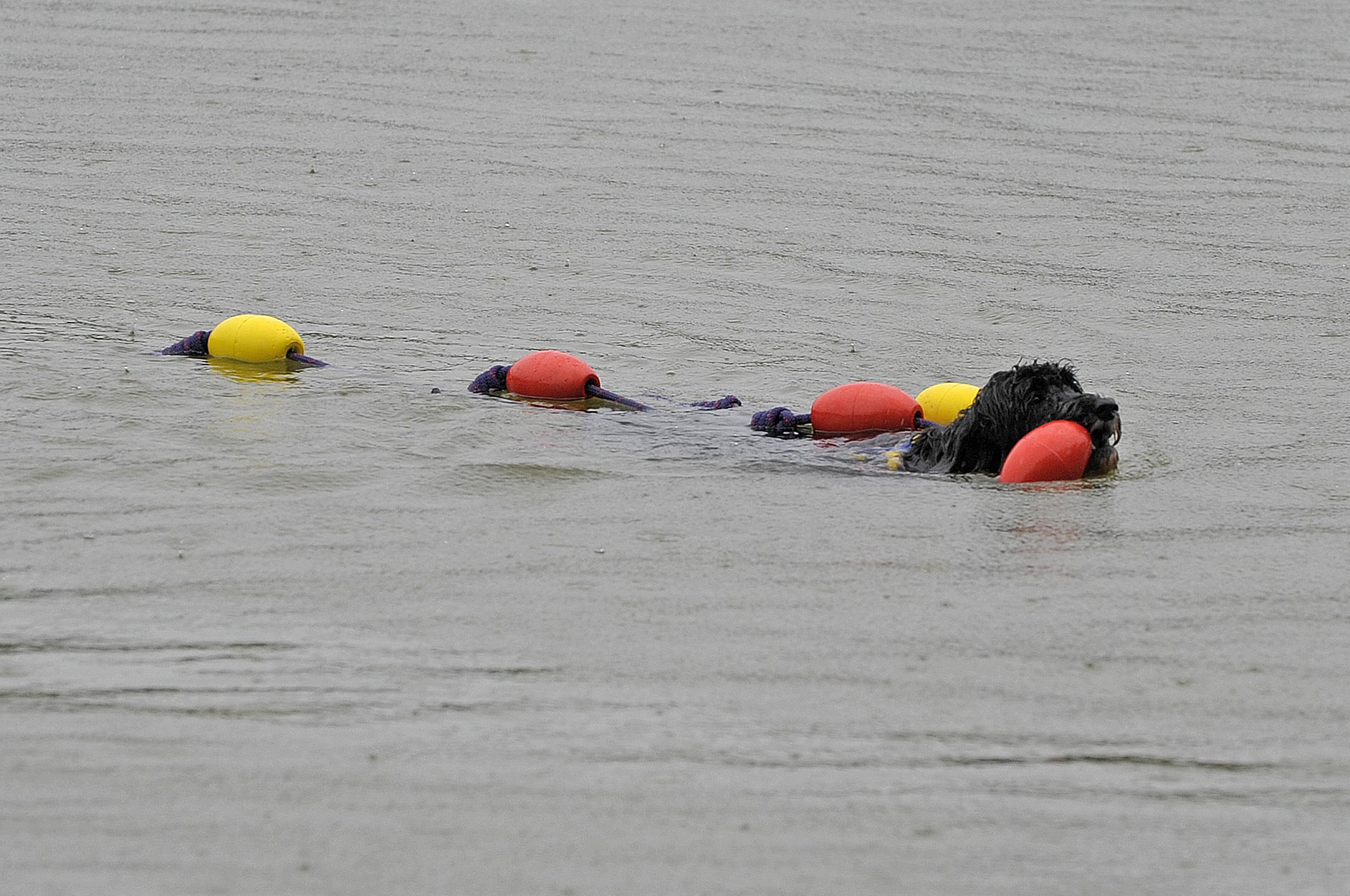 Jade retrieving her float line