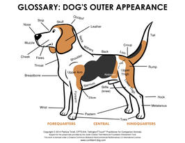 Glossary: Dog's Outer Appearance