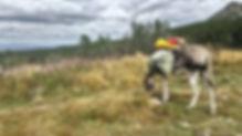 rando âne en vercors