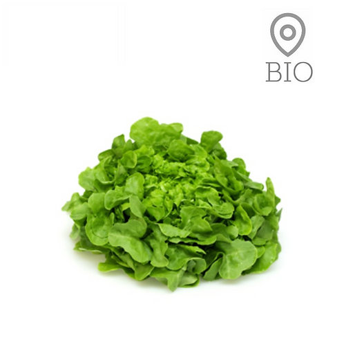 Salade feuille de chêne verte BIO - 1 pce