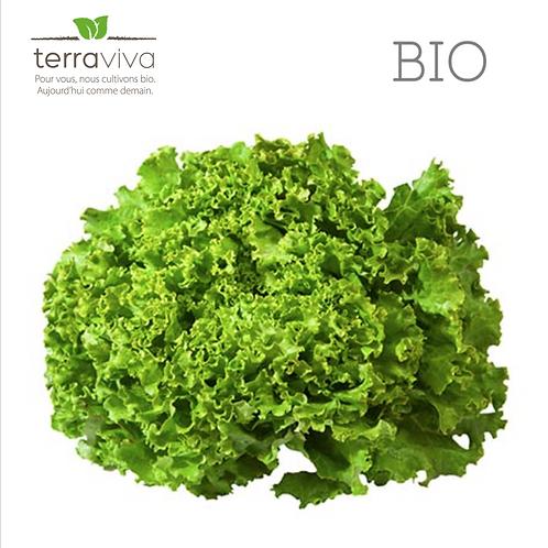 Salade Batavia Bio - 1pce