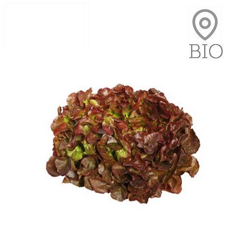 Salade feuille de chêne rouge BIO - 1 pce
