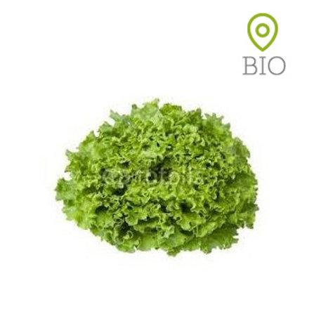Salade Batavia verte BIO - 1 pce