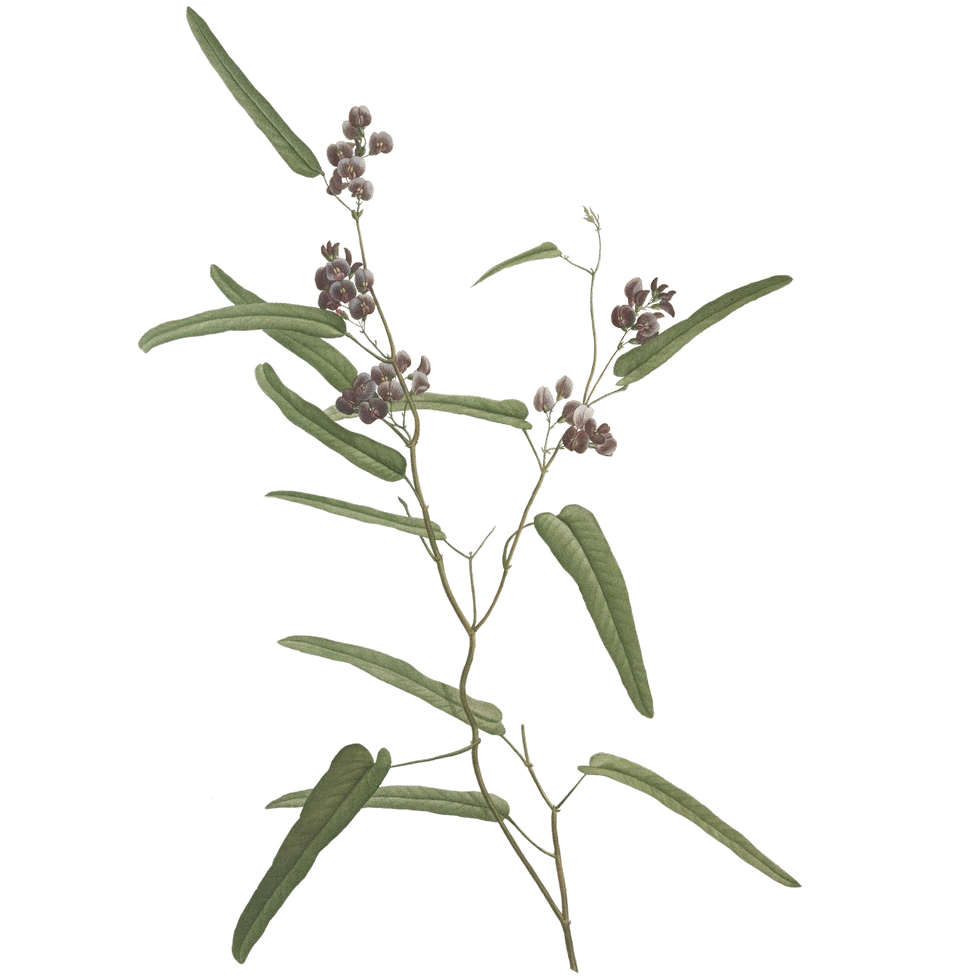 plant_04.png