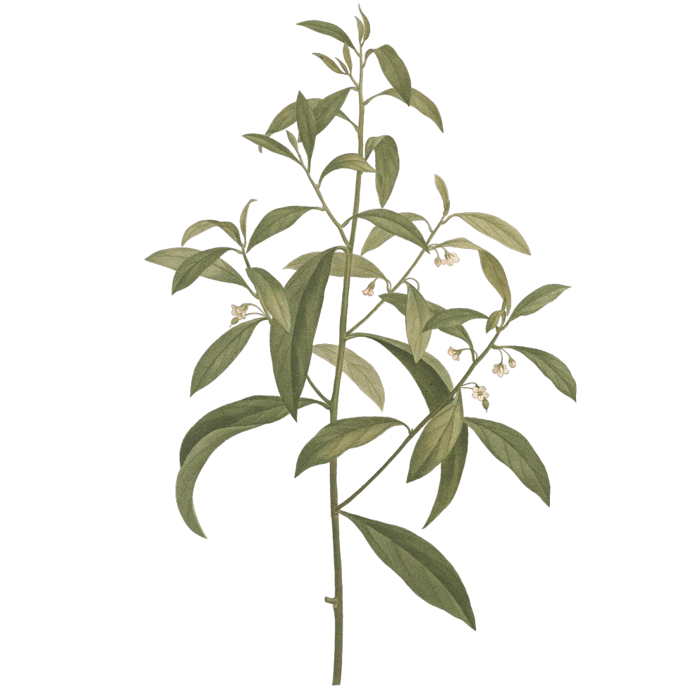 plant_05.png