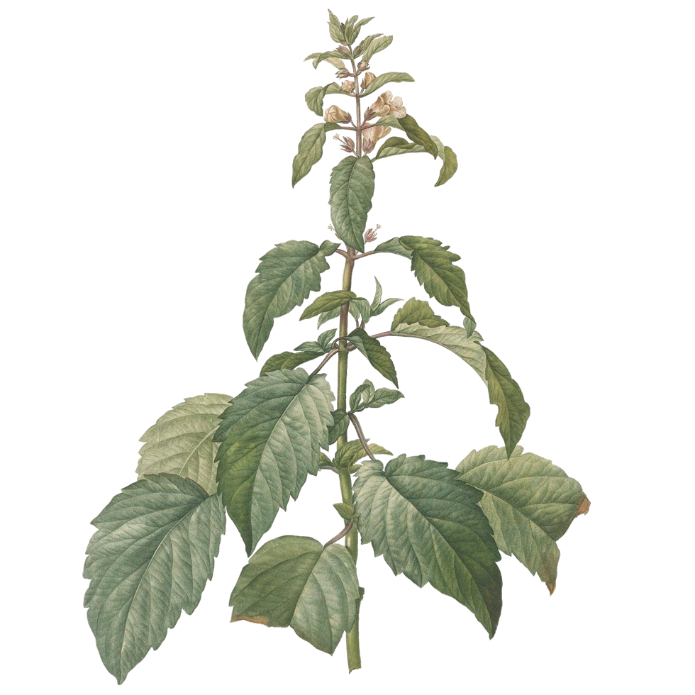 plant_02.png