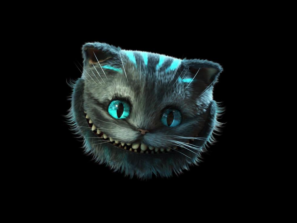 Cat.mp4
