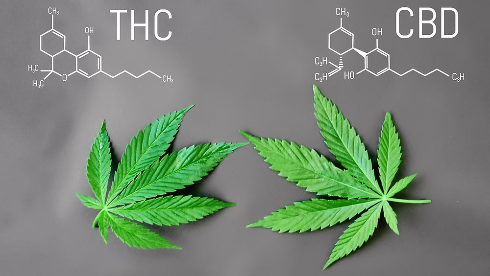 Using CBD and THC Together