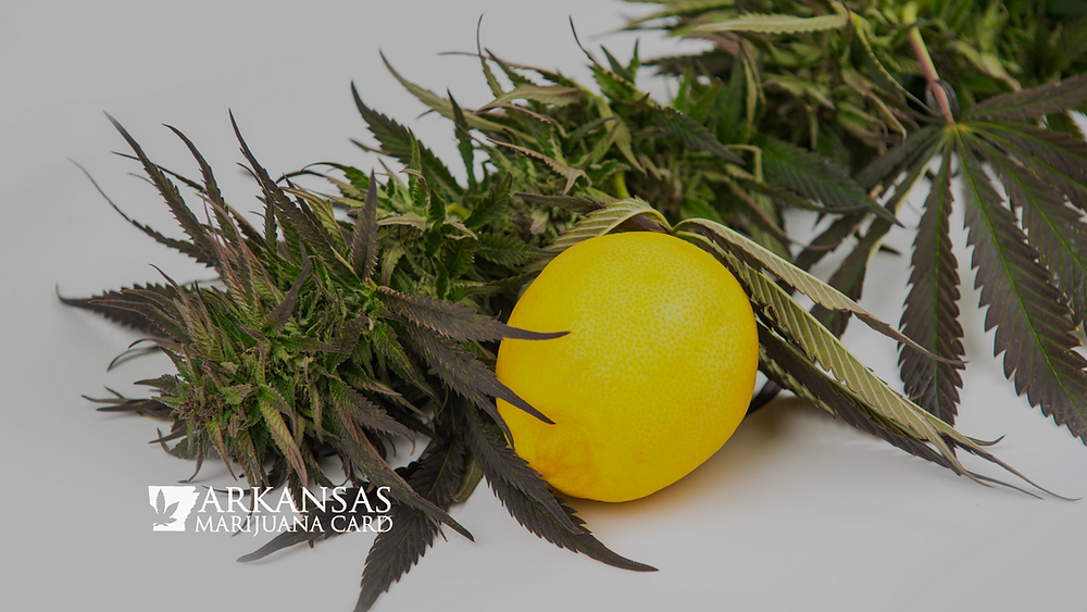 The Importance and Benefits of Cannabis Terpenes