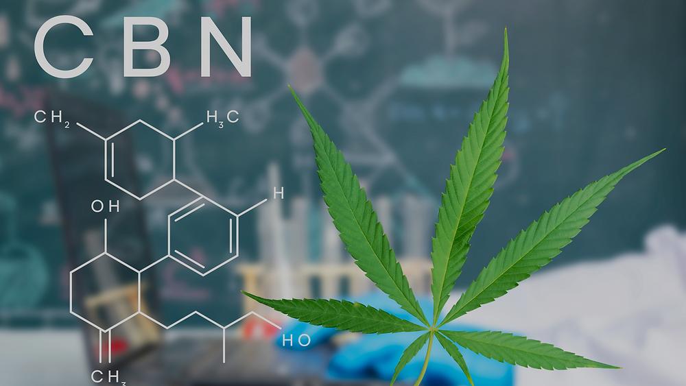 what is cbn marijuana