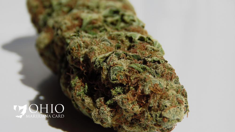 top cannabis strains of 2020